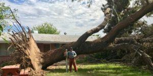 Jesse with Huge Tree Behind Him