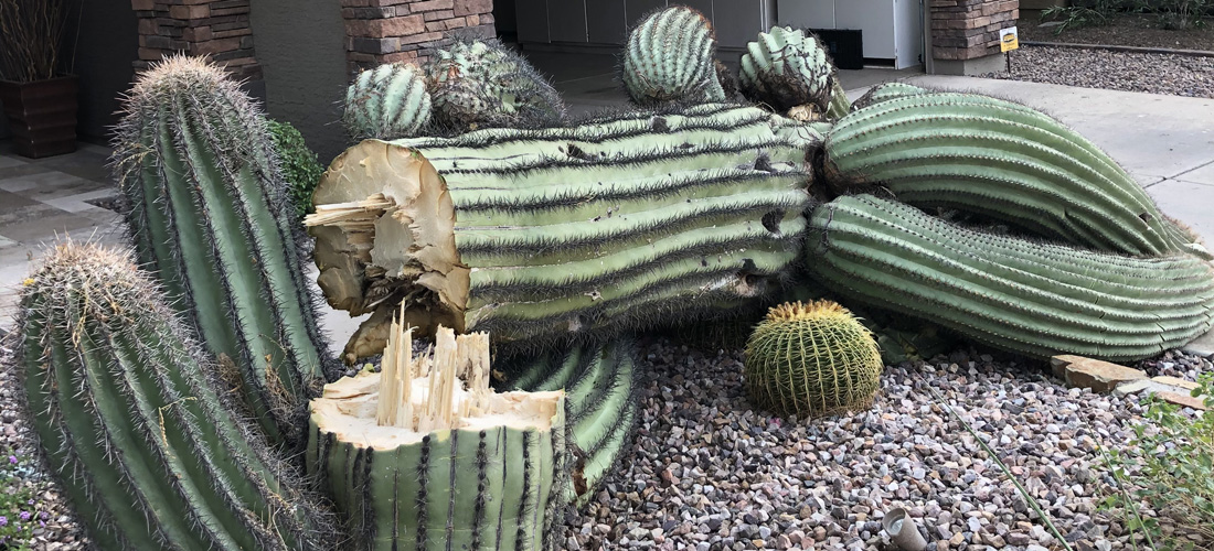 Cactus Removal Arizon Tree Trimming