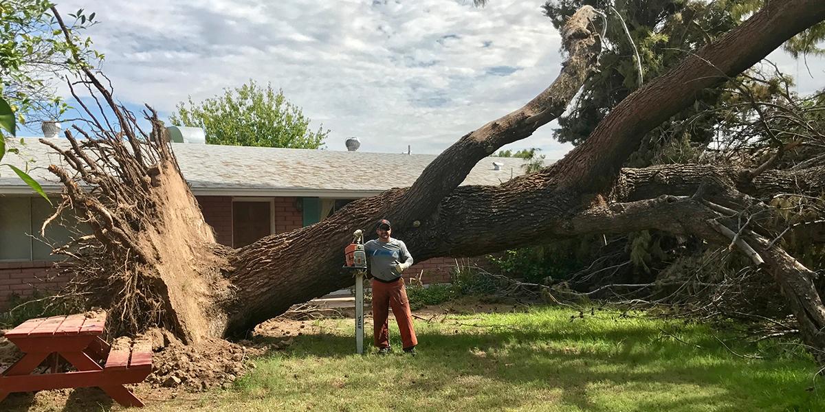 Jesse Removed Huge Tree