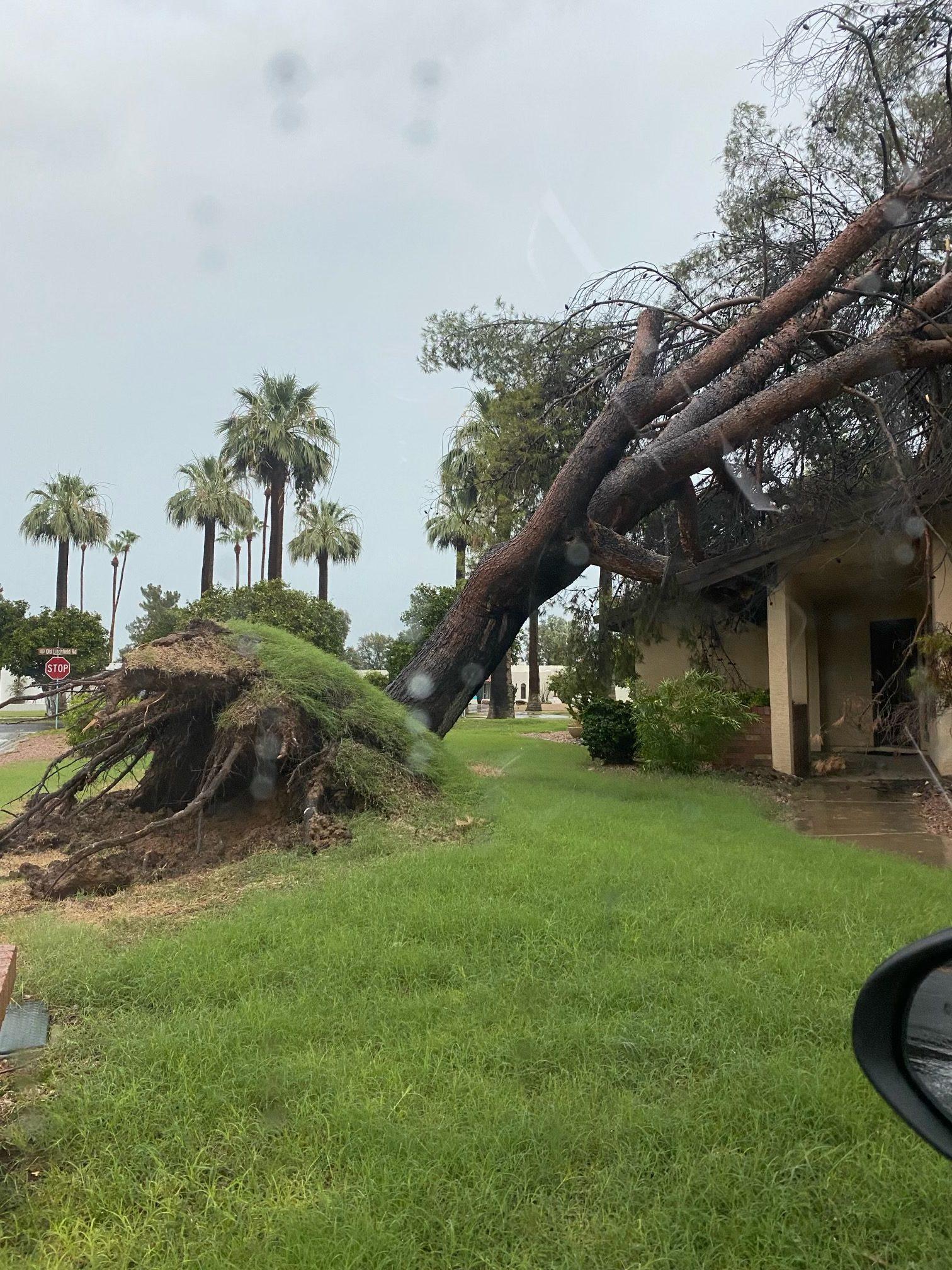 fallen tree in monsoon storm