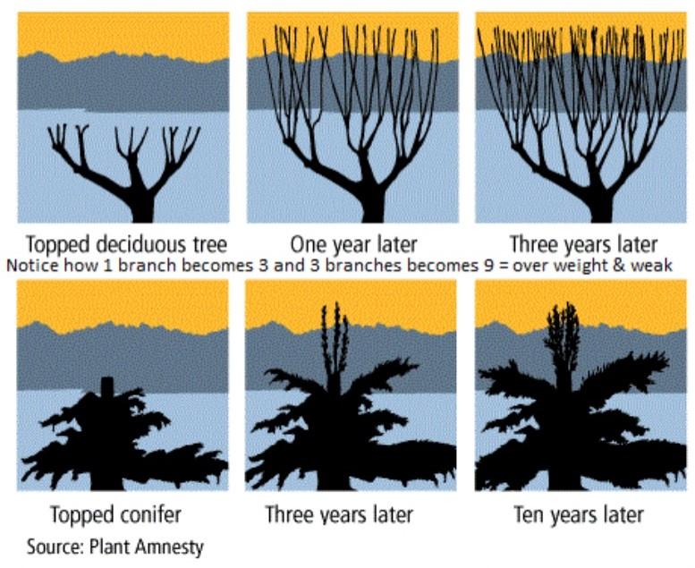 tree topping visual
